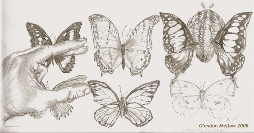 Trilobitlepidoptology -drawing by GlendonMellow