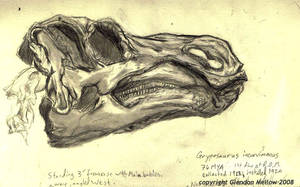 Gryposaurus skull by GlendonMellow