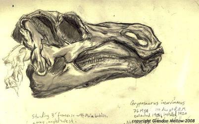 Gryposaurus skull