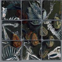 Haldane'sPrecambrianPuzzle-B by GlendonMellow
