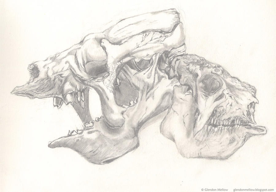 Eremotherium Glyptodon skulls by GlendonMellow