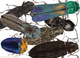 Jewel Beetle Crowd by GlendonMellow