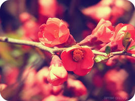 Manic Botanic by anonymouslyours