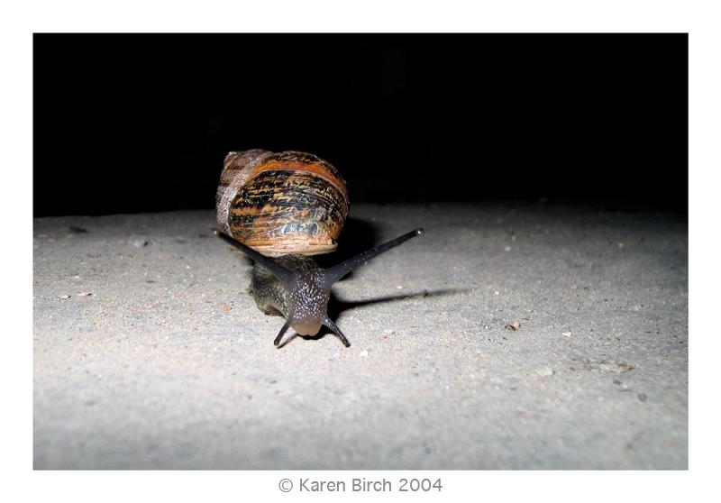 Night Snail