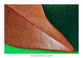 Leaf by karenbirch
