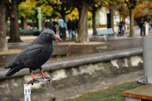 Crow Figure