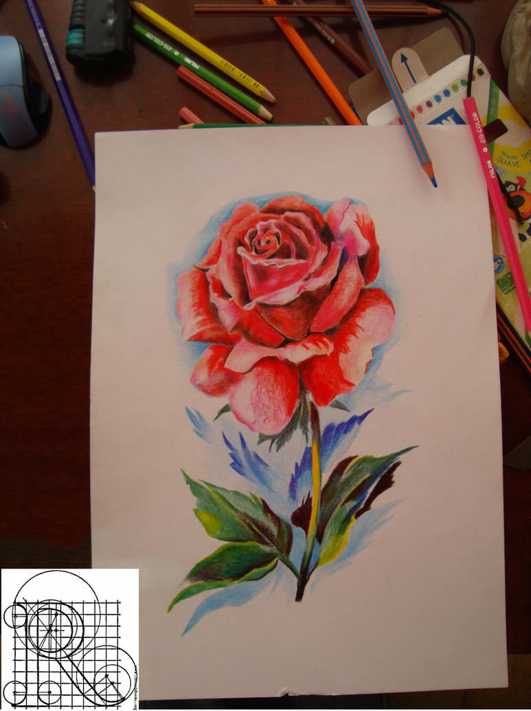 Rosecolor Pencil Drawing By Robiartimre