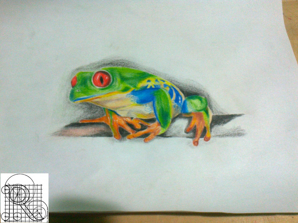 Frog,color pencil drawing by robiartimre on DeviantArt