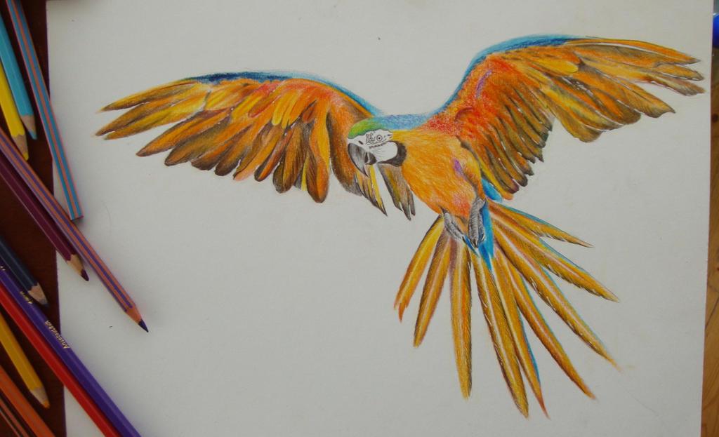 Parrot Pencil Drawing