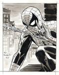 Spider-man Gray