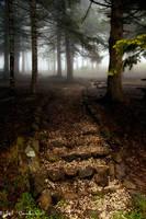 From the fog... by bilalcankiri