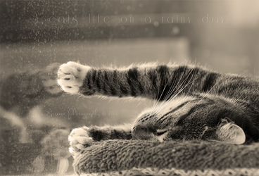 A cats life on a rainy day by Azzeria