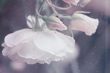 Dreams by Azzeria
