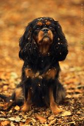 Autumn cutie by Azzeria