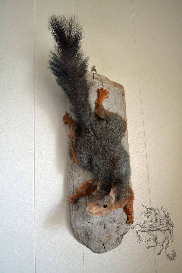Squirrel by JaneMadeleine