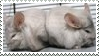 Chinchilla- Stamp by Tipsutora