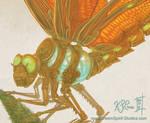 Clockwork Dragonfly Close Up
