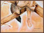 Dream Spirit _Close Up of Feet