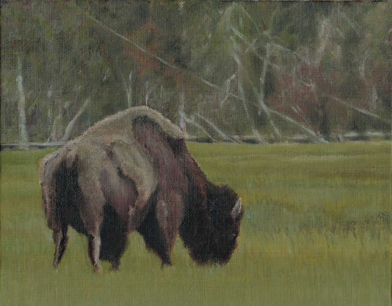 Where have all the Buffalo gone by drawntoatee