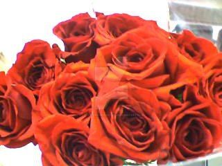 Roses are Red by LovelyDreamer3192012