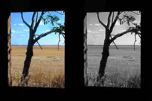 Tree Comparison by sioranth