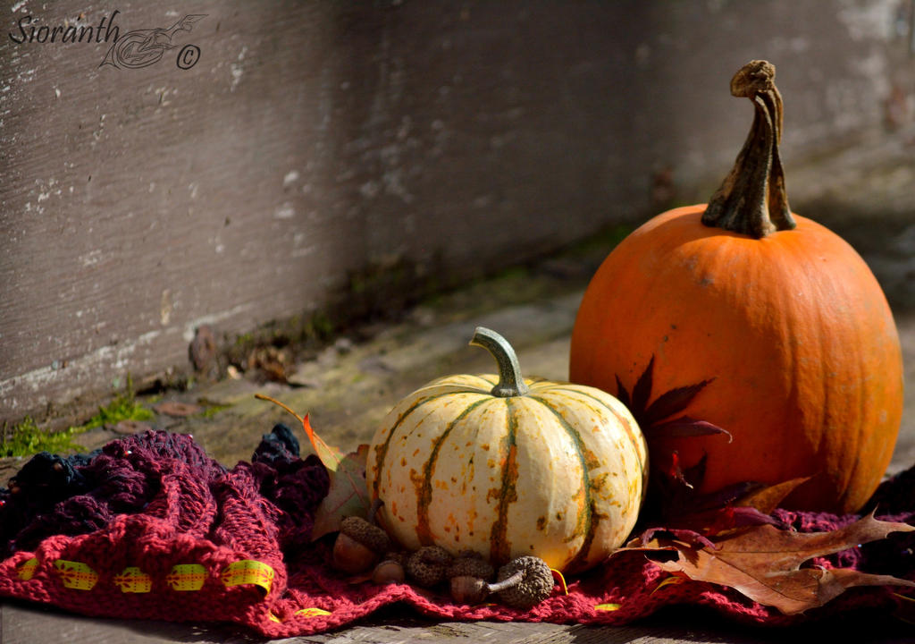 Autumn Impressions by sioranth