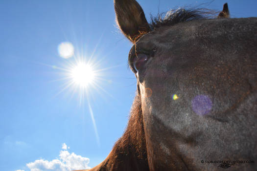 Equine Expressions - Remiel in the Sun
