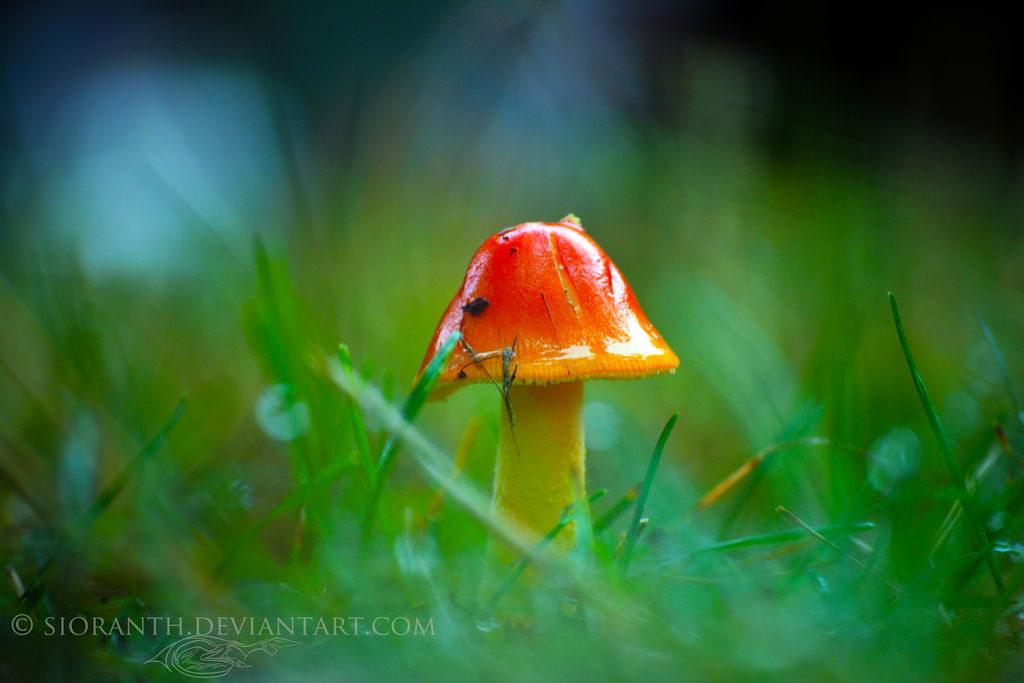 Fairy Home by sioranth