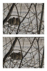 Two sparrows by Crazy-Gopher