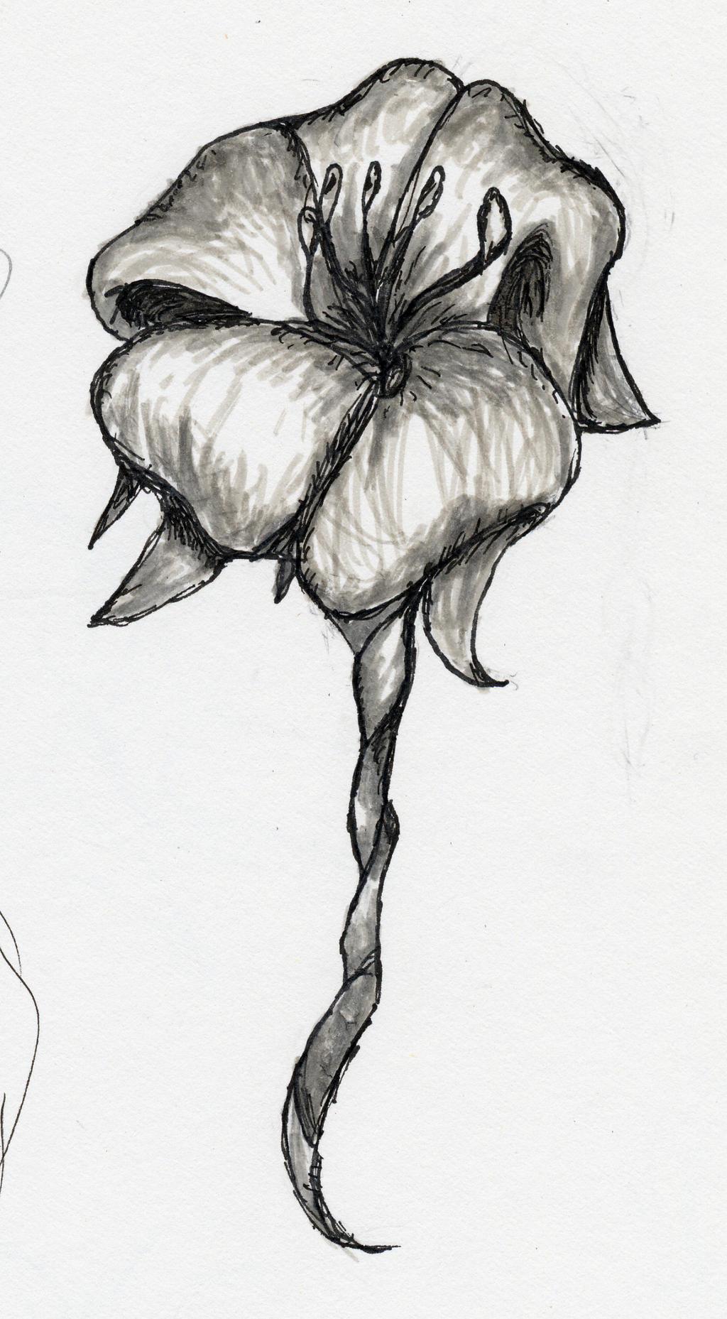 Flower Sketch by Kimiko Takahashi tan on DeviantArt