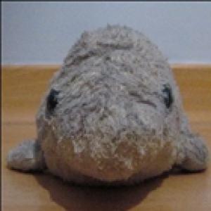 GiacomoLaw's Profile Picture
