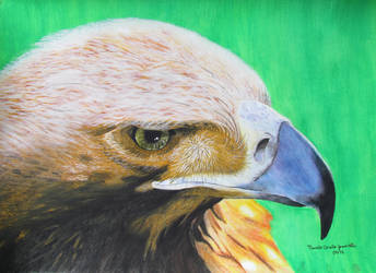 Eagle by murilocz