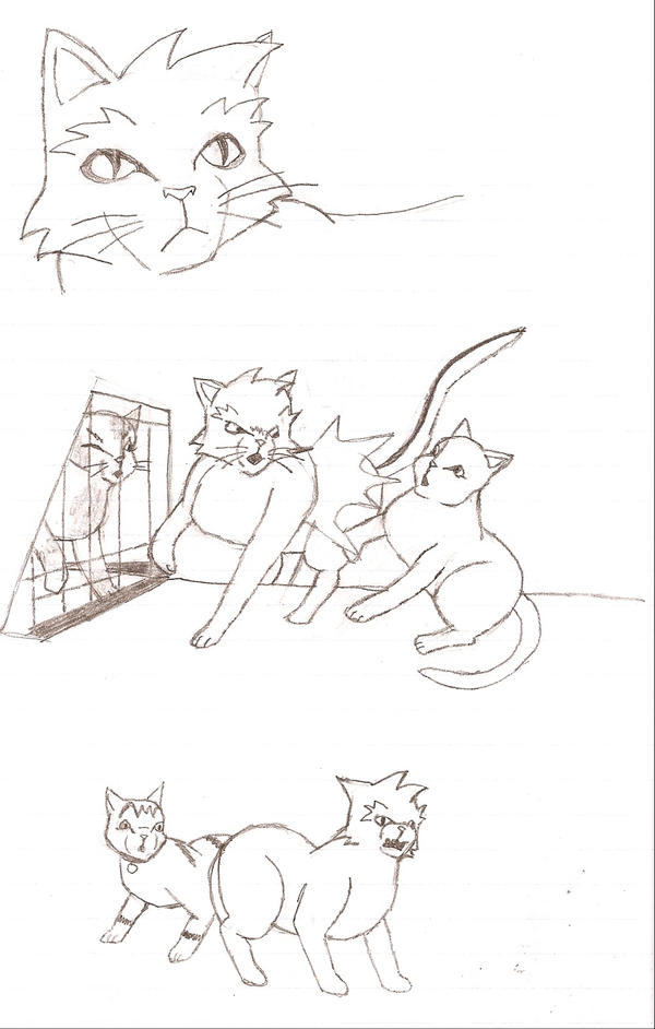 Anime Cat Sketches