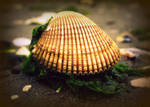 Seashell Presentation