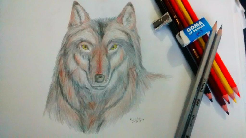lobo by nicowtc