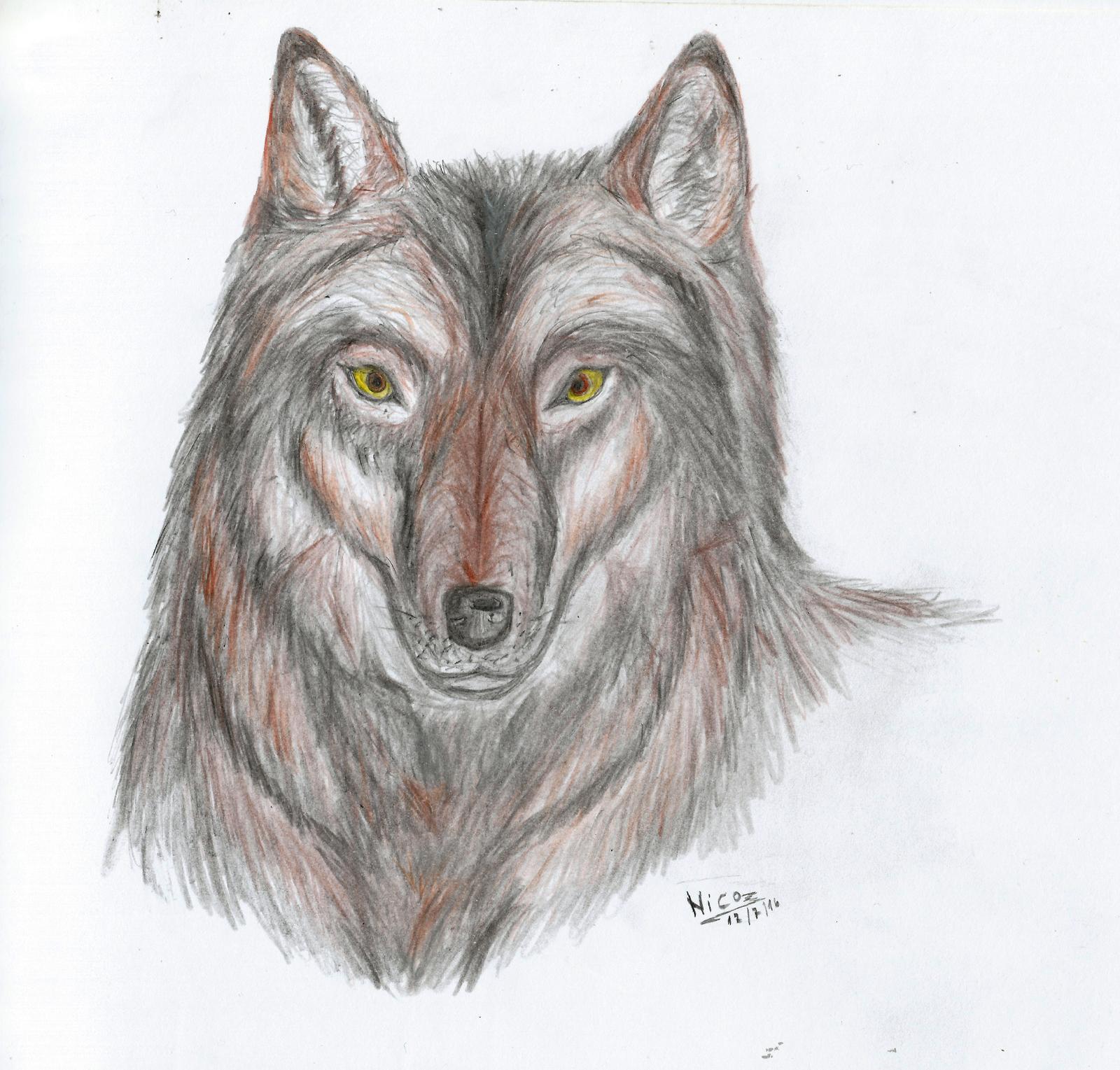 lobo dibujo by nicowtc