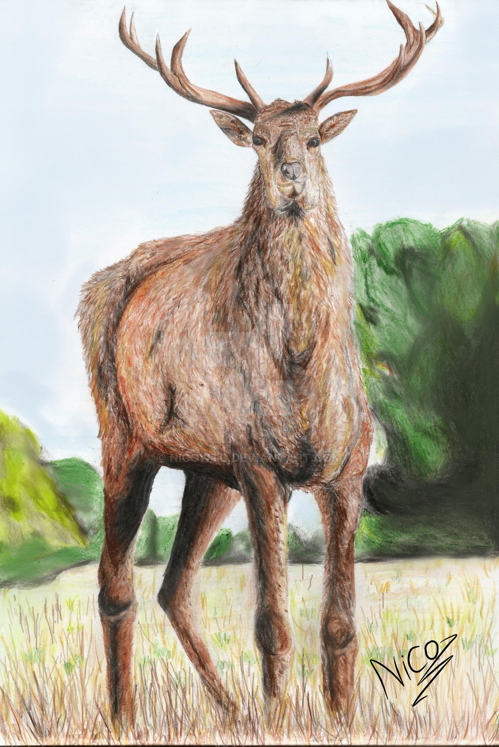 ciervo by nicowtc