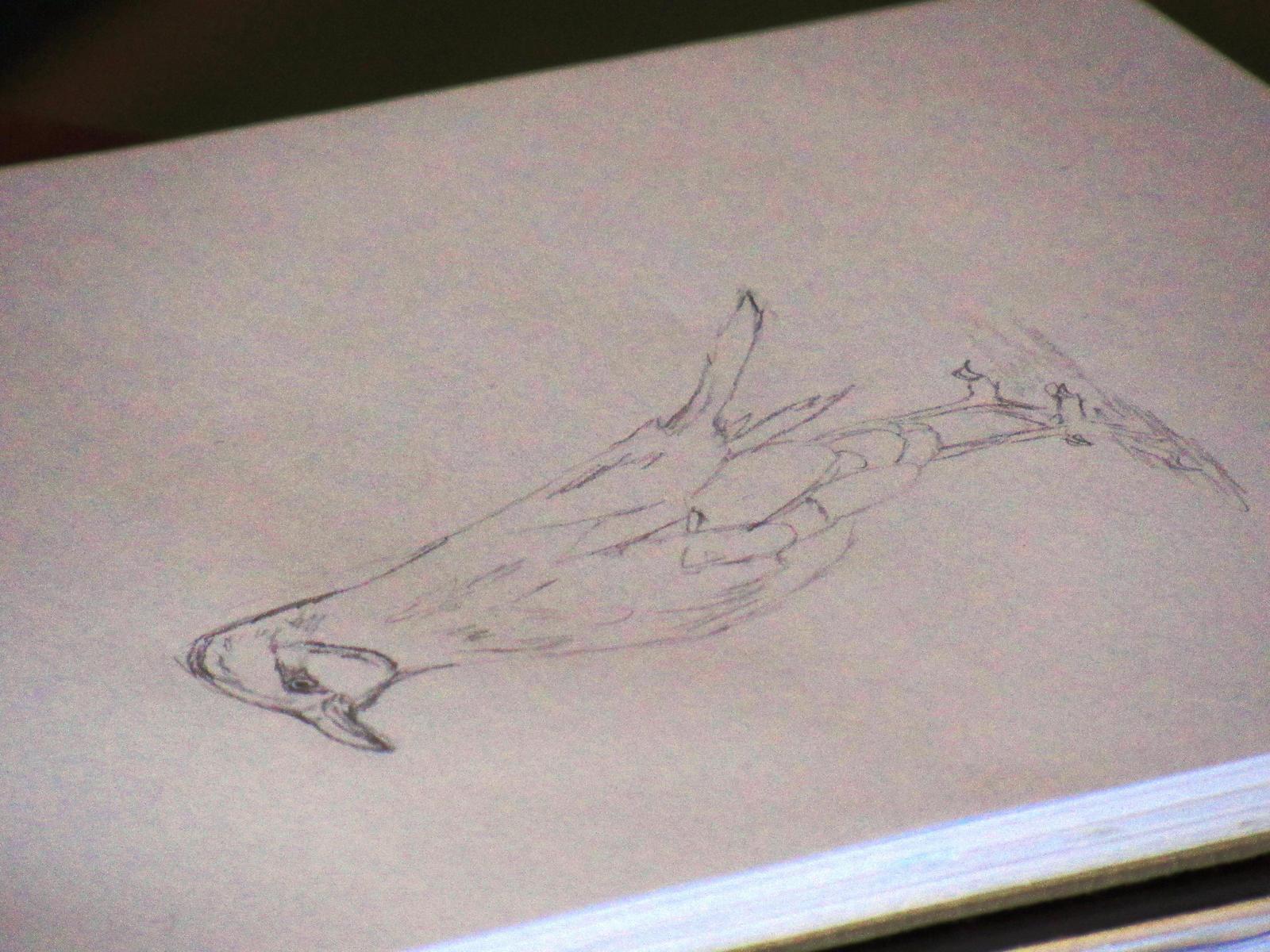 dibujo ave tradicional by nicowtc