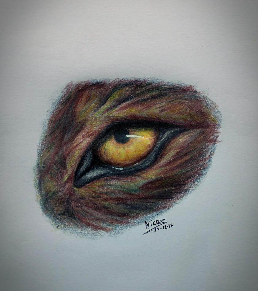 wolf eye  by nicowtc