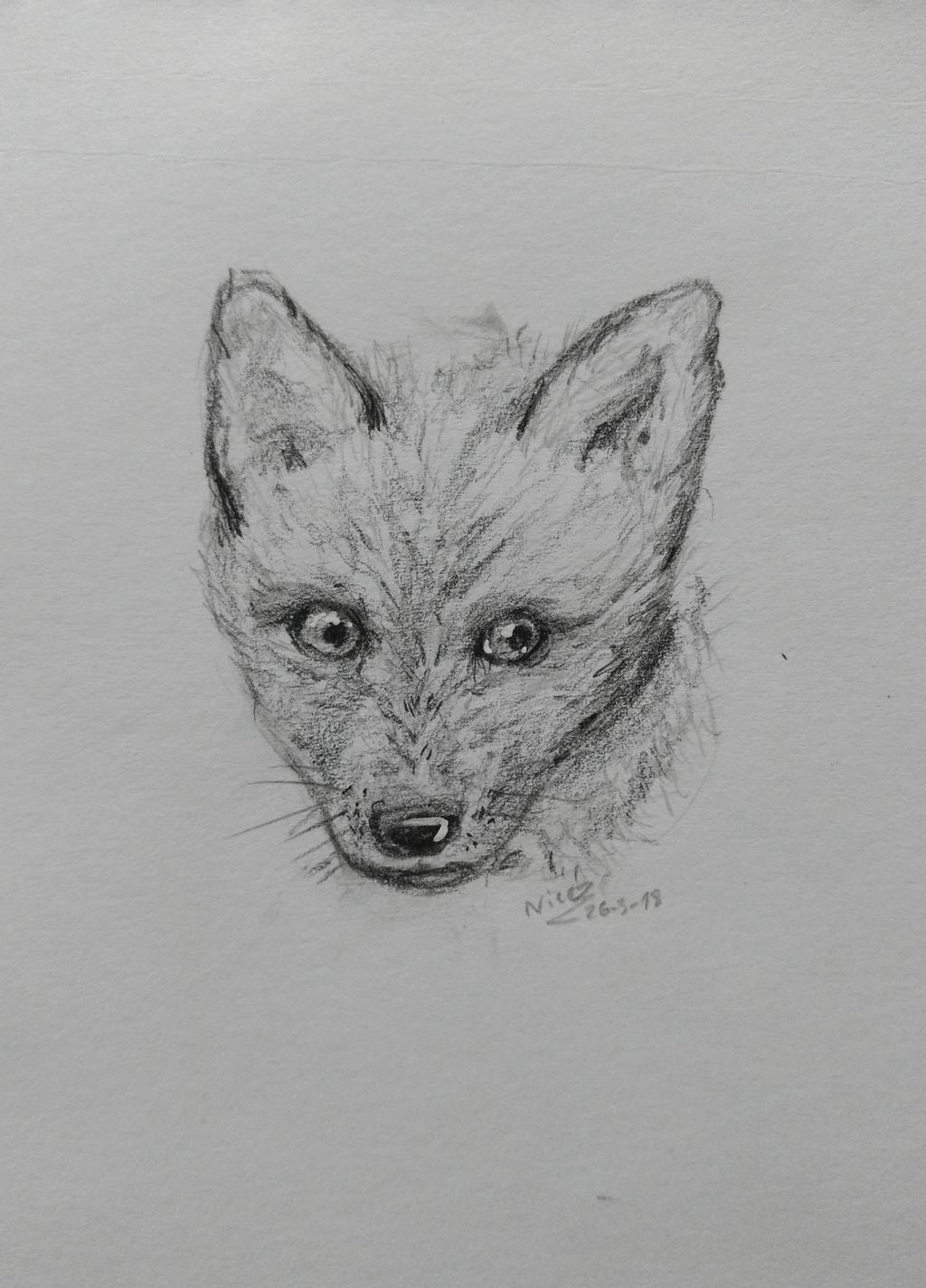 tender fox by nicowtc