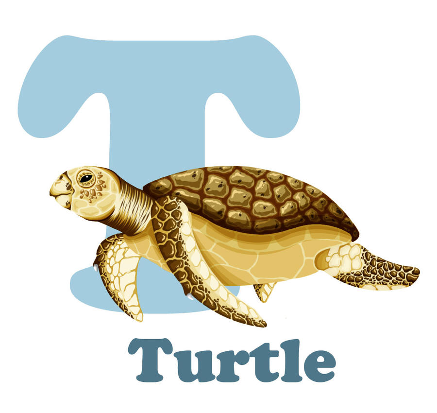 T Is For Turtle By RSImpey On DeviantArt