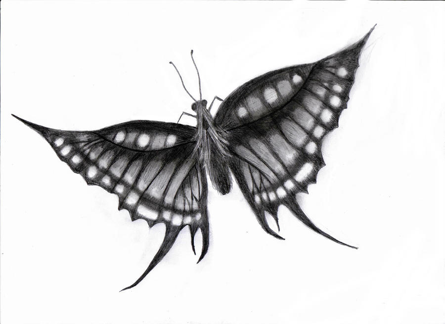 Flying Butterfly Drawings