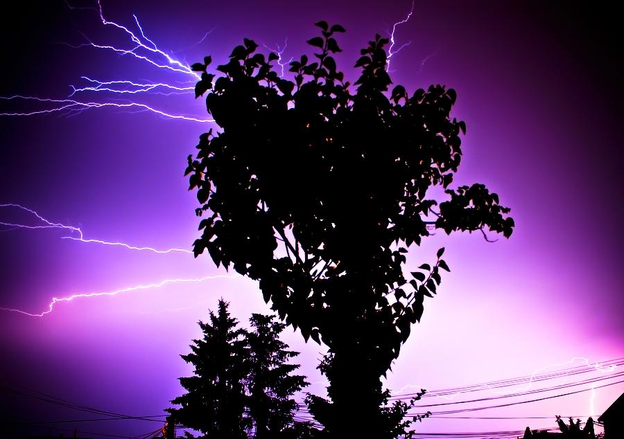 Electrical tree by Meteorolog