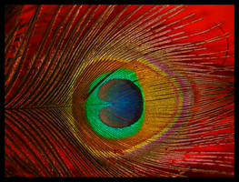 Peacock feather by Effira