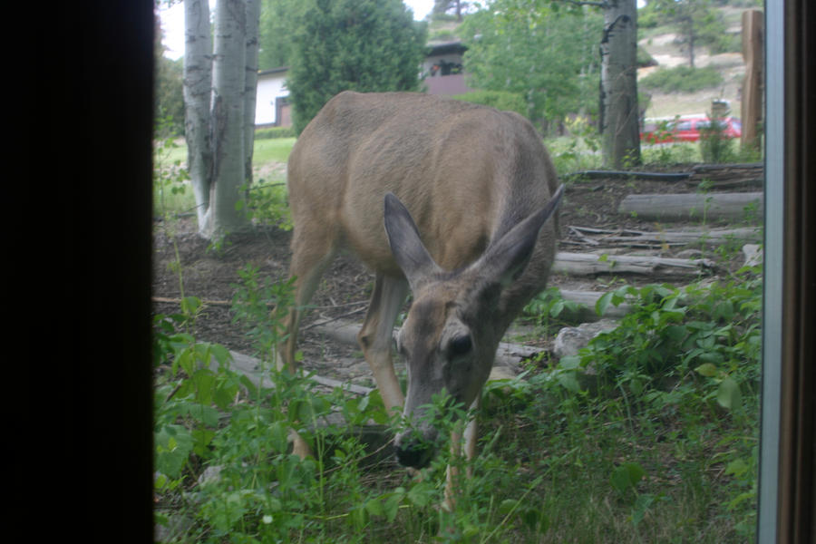 Deer Me by esthermyla
