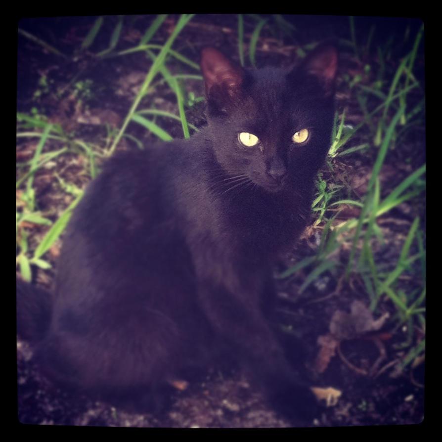 Yard Kitten by DayStarArts