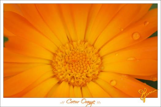 Coeur Orange (2012)
