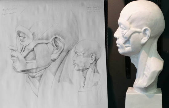 Anatomy studies : head, face and neck (2017)