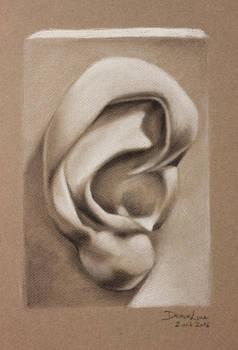 Anatomy studies : the ear