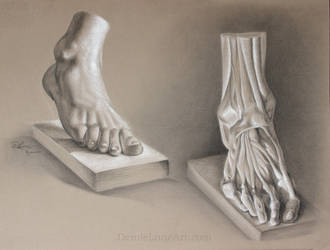Anatomy study - The foot
